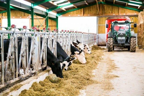 vaches etable fromagerie durand