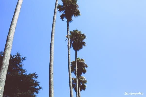 palmiers-porto-parc-cristal