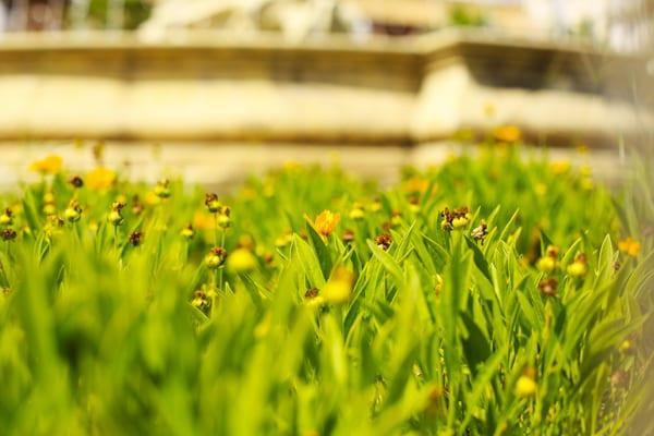 Herbe d'un parc à Séville