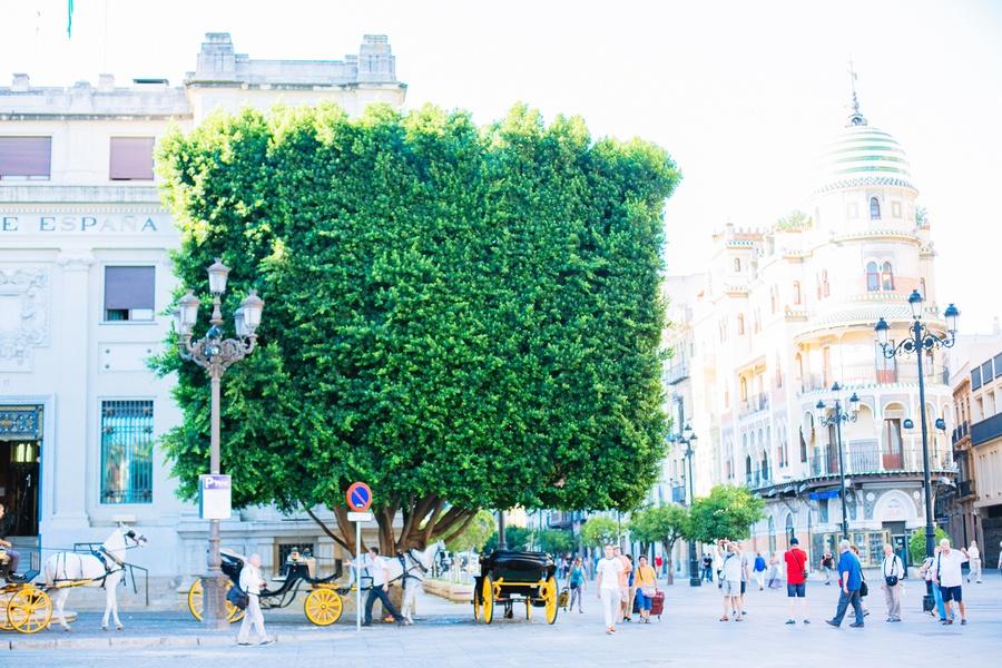 Les calèches de Séville