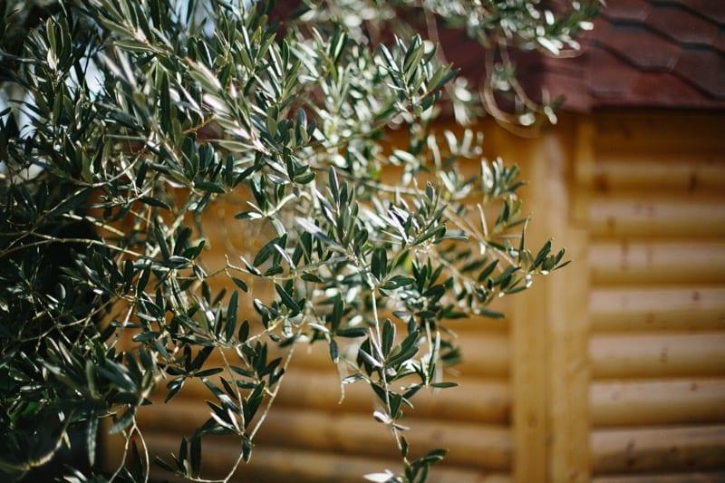 kota finlandais arbre