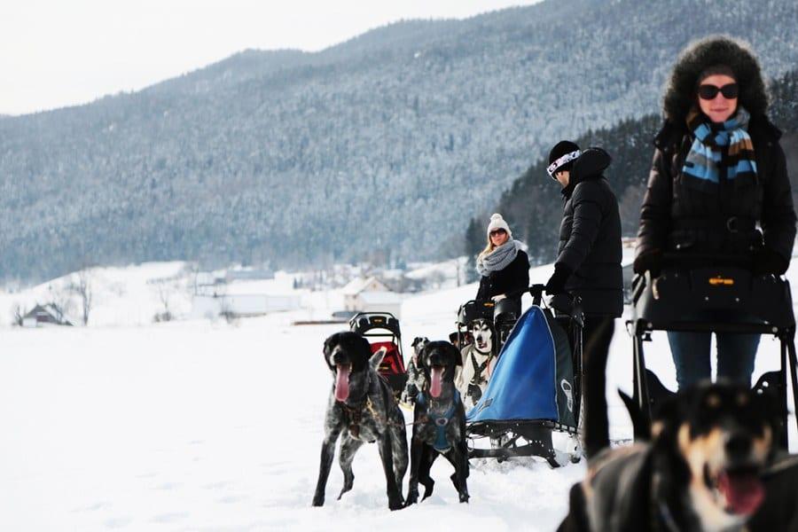 Un attelage de chiens de traîneaux