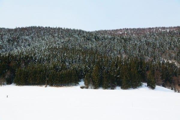 vercors montagne pin neige
