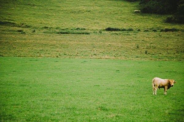 fontaine sous jouy eure vache
