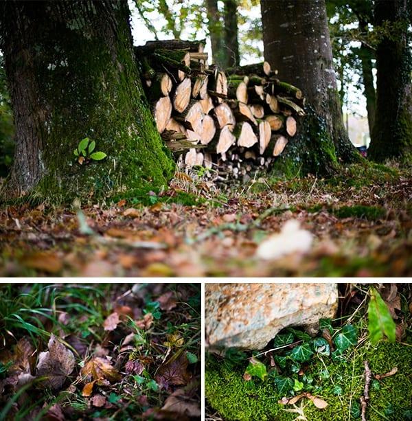 Manoir du Lys forêt