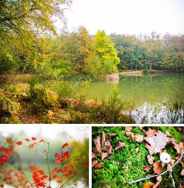 Forêt du Pavillon de Gouffern