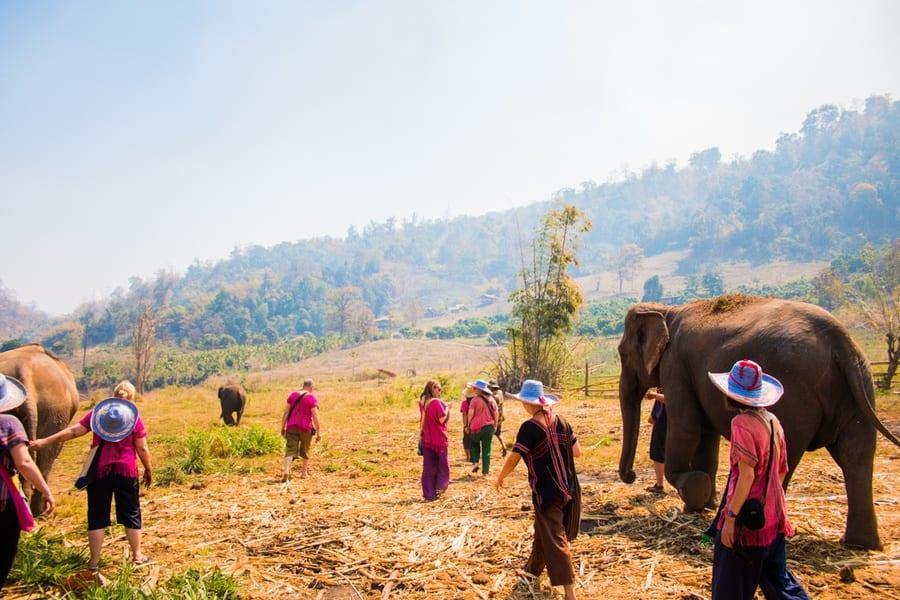 elephant chang mai