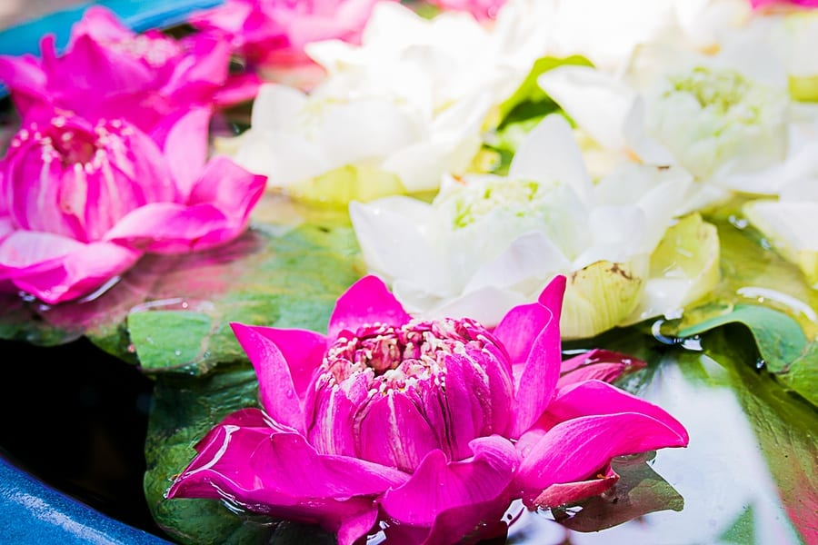 Les fleurs de la Maison de Jim Thompson à Bangkok