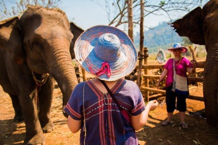 journee avec les elephants