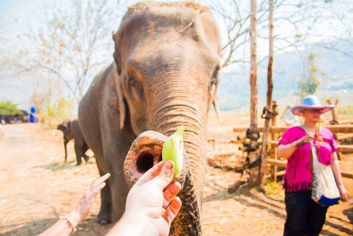 nourrir elephant thailande