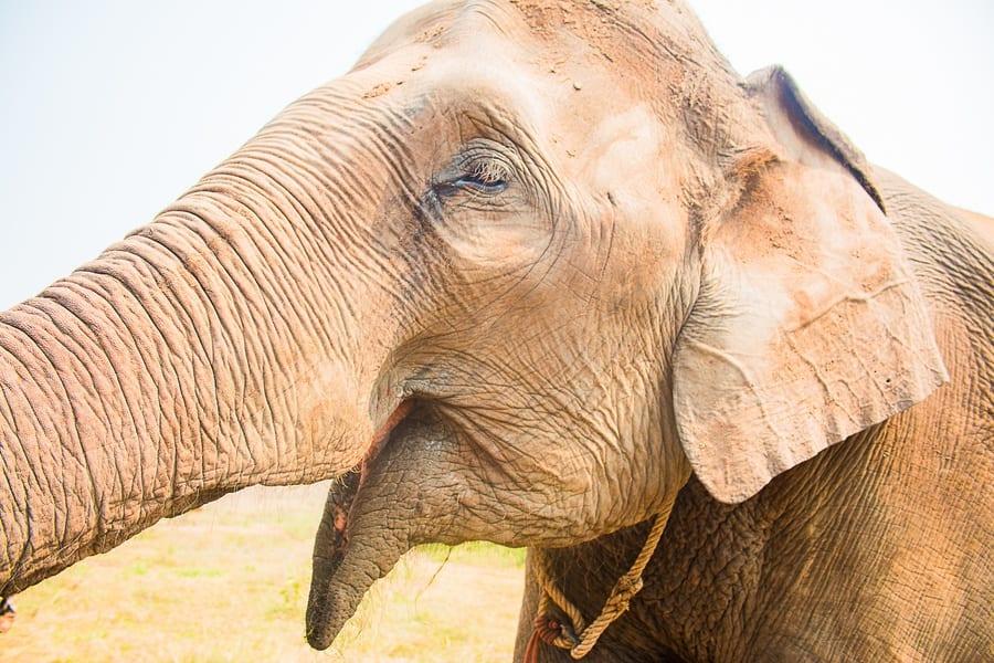 elephant sourire
