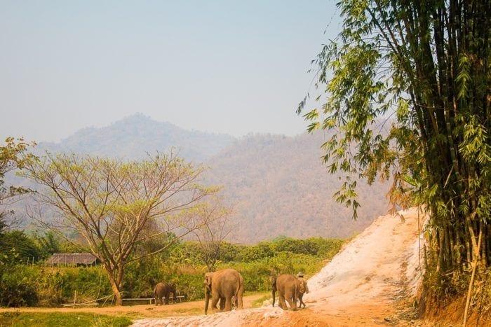 balade elephant