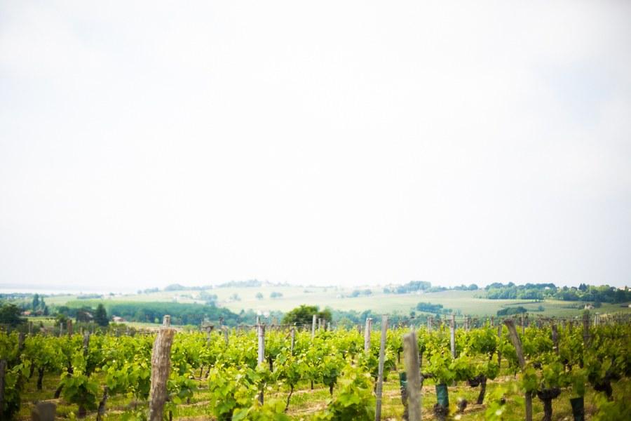 Les vignes de Côtes de Bourg