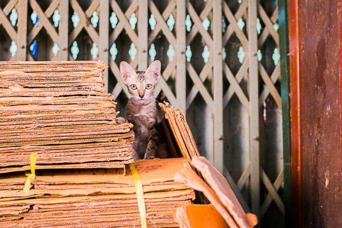 Nous croisons un petit chat au marché local