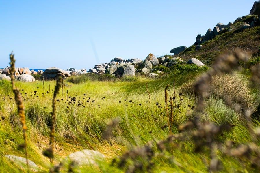 La nature de l'île Lavezzi