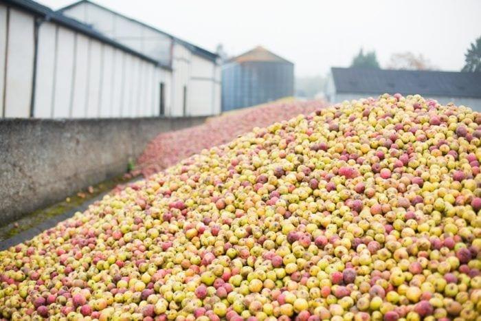 pommes utilisées pour faire le calvados