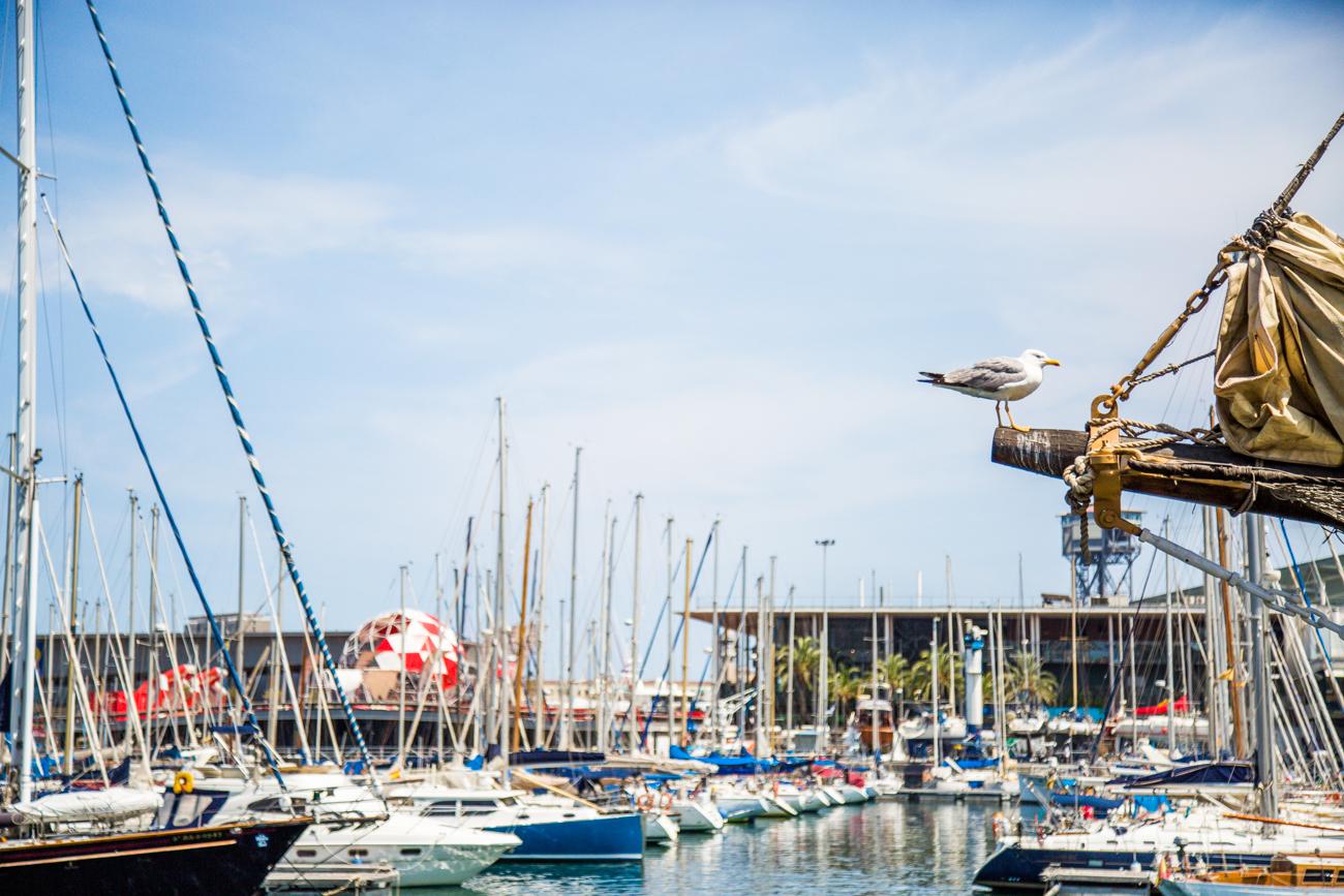 Le port de Vell à Barcelone