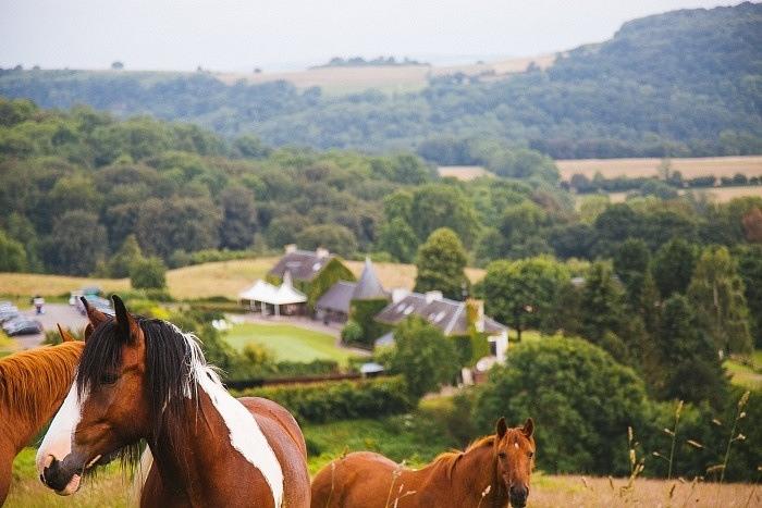 Les chevaux du golf de Clécy en Suisse Normande