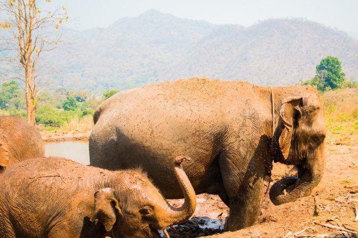 Sanctuaire des Elephants, Chiang Maï, Thaïlande