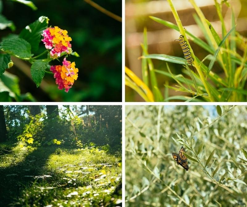 Faune et flore du jardin botanique de Lisbonne