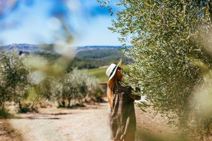 vignes vallée chianti