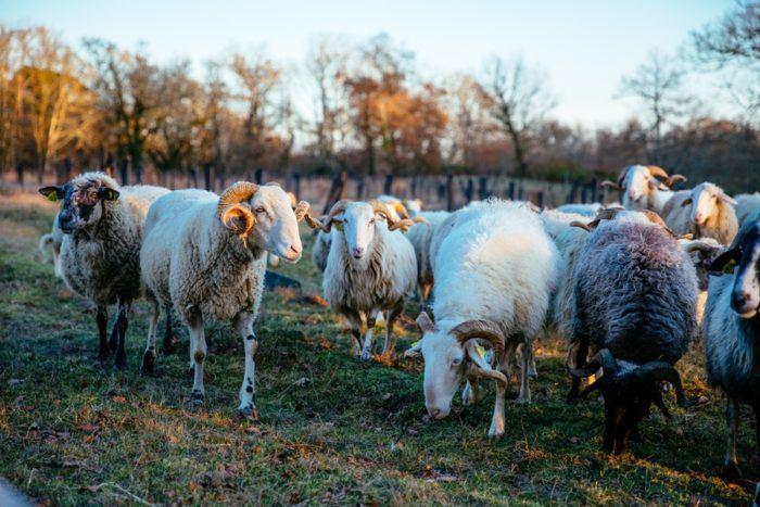 Les animaux de la Ferme des 9 Fontaines à Bostens