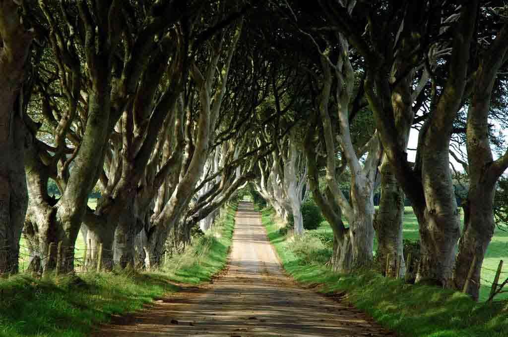Dark Hedges, lieu de tournage Game of Thrones