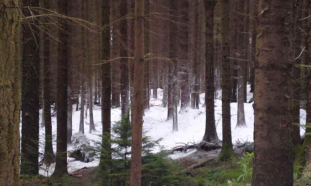 Forêt de Tollymore, lieu de tournage Game of Thrones